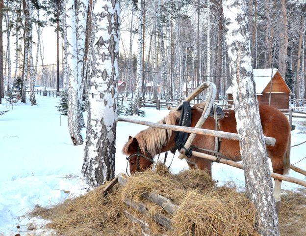 Лошадка жует сено зимой